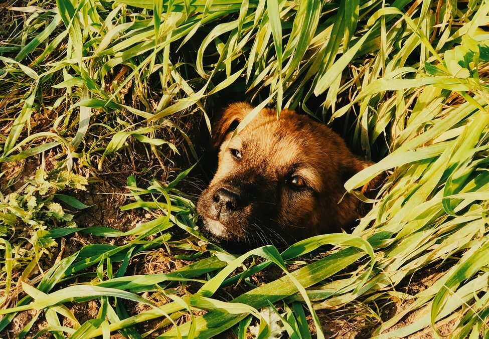 adorable mongrel dog sitting in hole in park