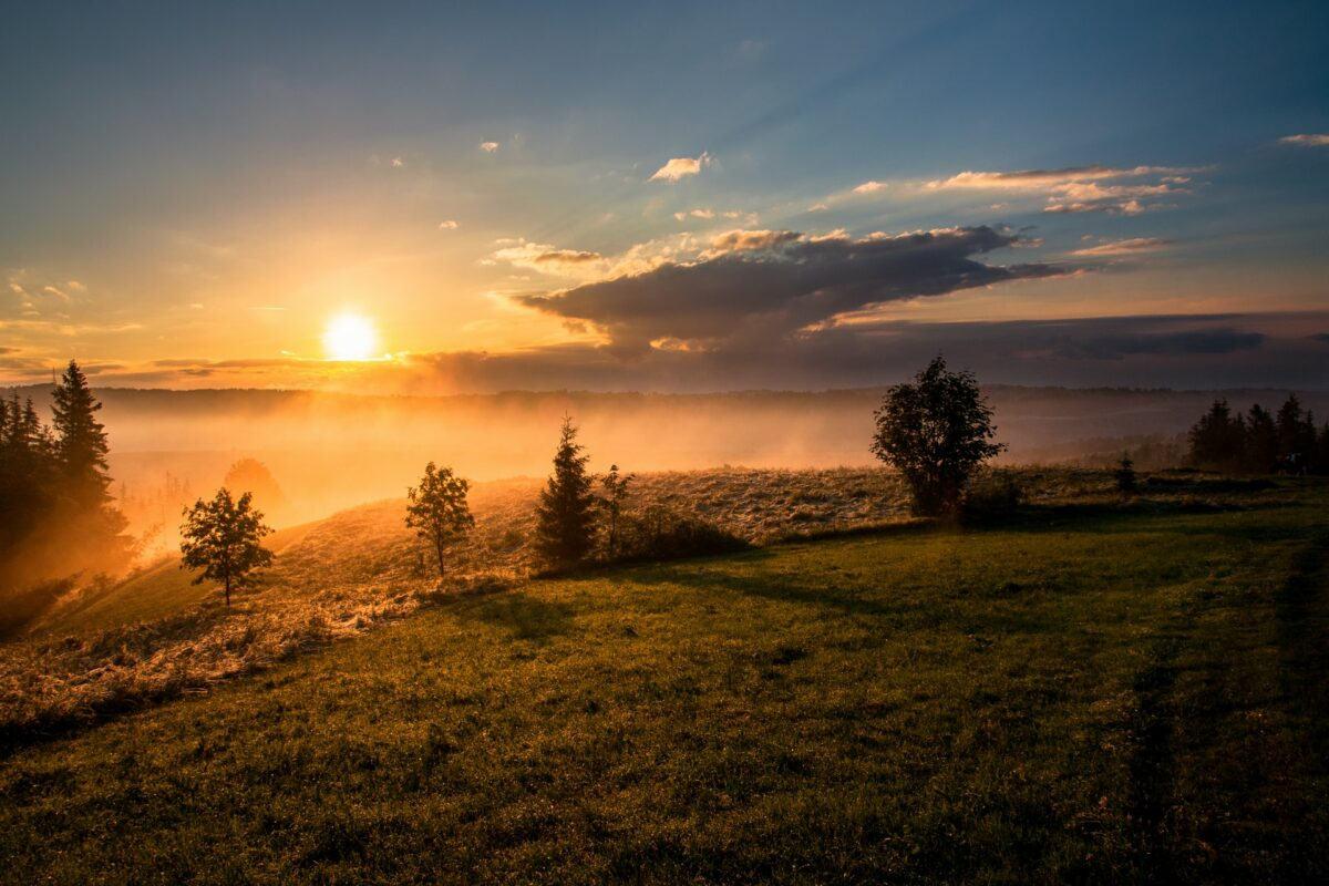 Sunrise over field with trees